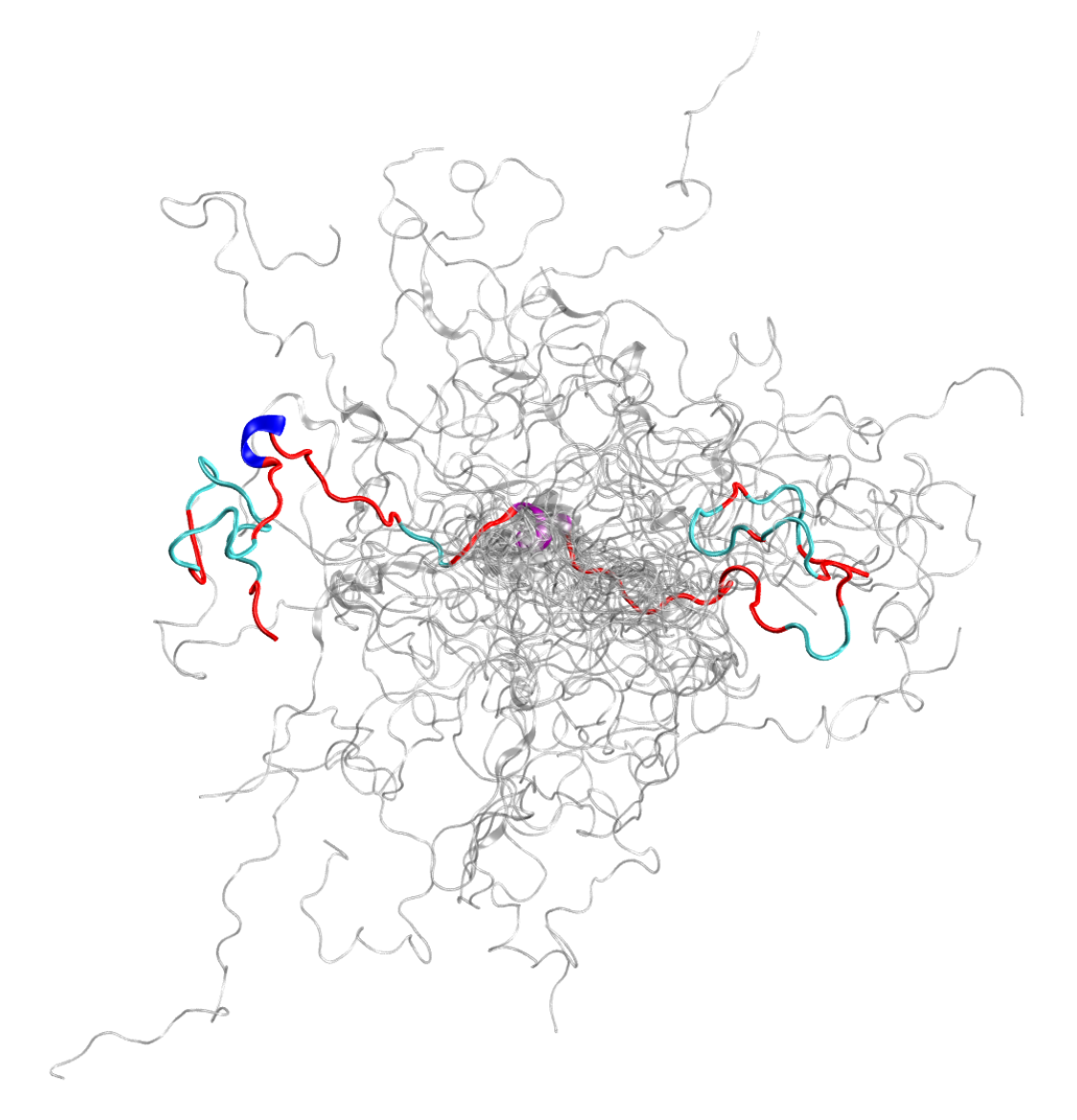 The configurational ensemble (a collection of 3D structures) of an intrinsically disordered protein, the N-terminal of c-Src kinase, which is a major signaling protein in humans.