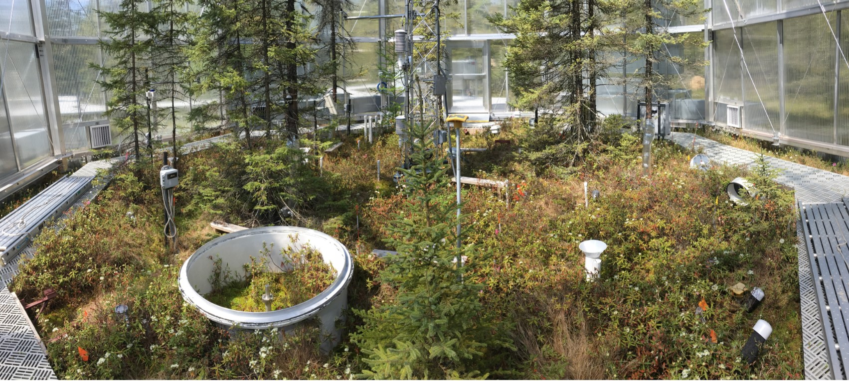 The highly instrumented SPRUCE enclosures measured the movement of carbon through peatland plots, recording that warmed peat bogs shifted from carbon accumulators to carbon emitters. Credit: ORNL, U.S. Dept. of Energy