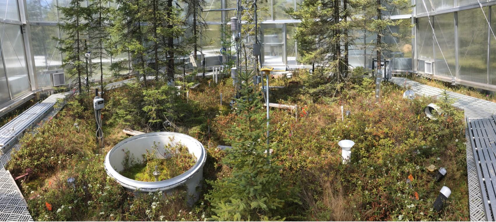 Os gabinetes SPRUCE, altamente instrumentados, mediram o movimento do carbono através de parcelas de turfeiras
