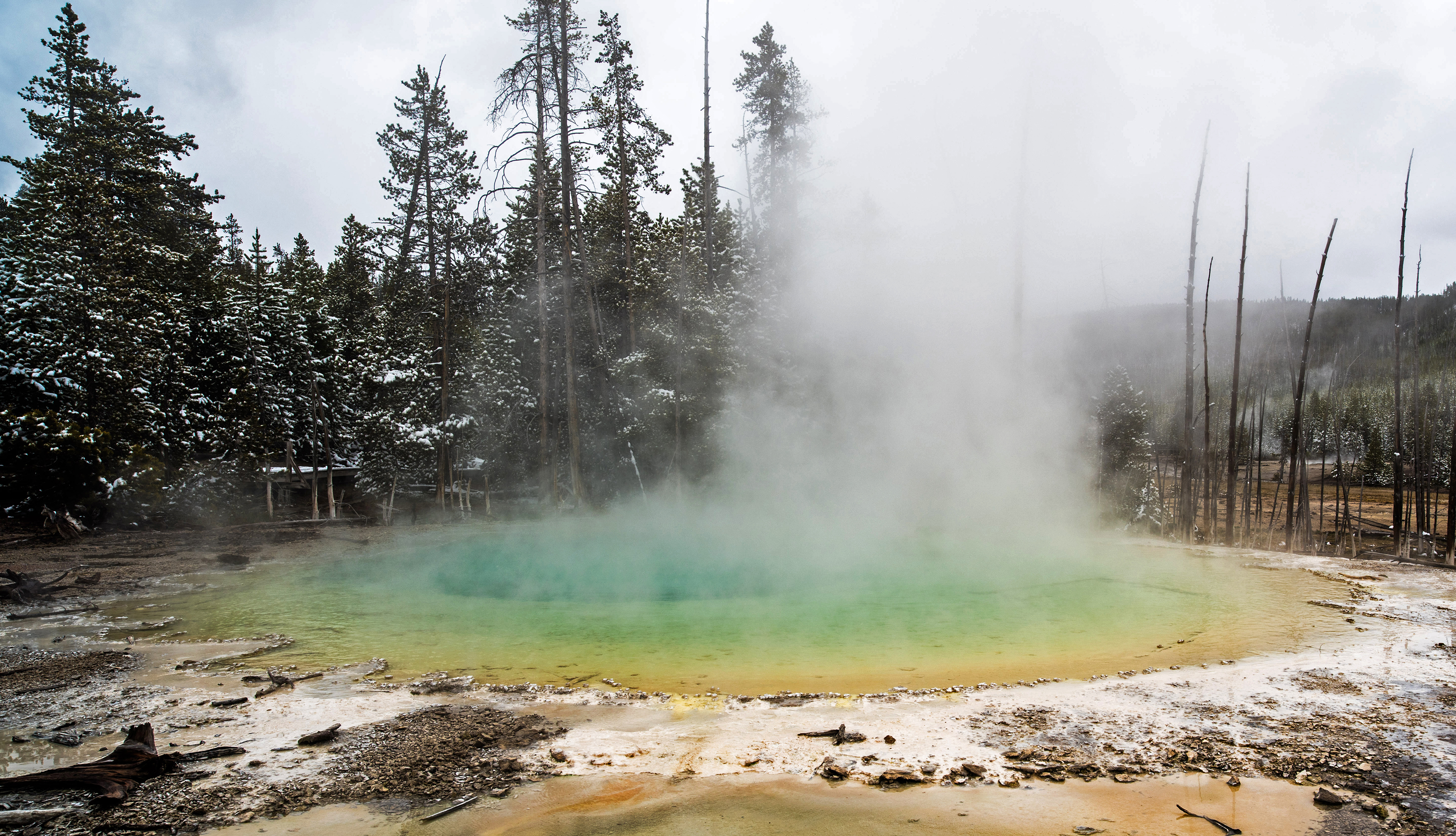 Cistern Spring in Yellowstone National Park is home to the elusive archaeon Nanopusillus acidilobi.