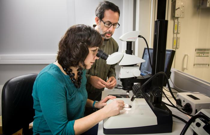 Brenda Pracheil and Bryan Chakoumakos examine the structure of an otolith under a microscope.