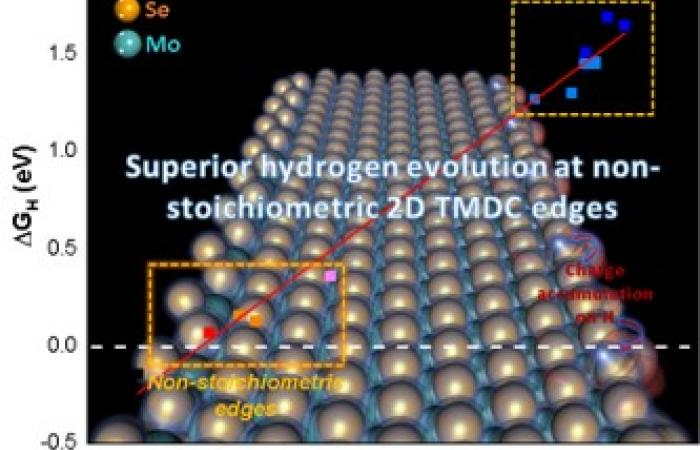 Optimal Electrocatalytic Hydrogen Evolution in 2D TMDs