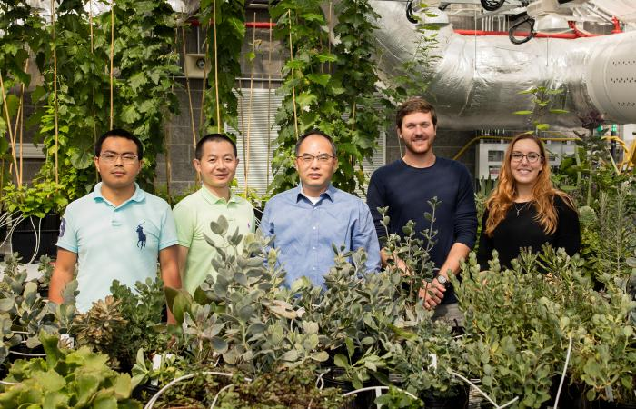 "An ORNL-led research team identified 60 genes that exhibited convergent evolution in crassulacean acid metabolism species, including a novel variant of a ""worker"" enzyme critical to CAM plants' water-use efficiency. Representing the team are, from left, D"