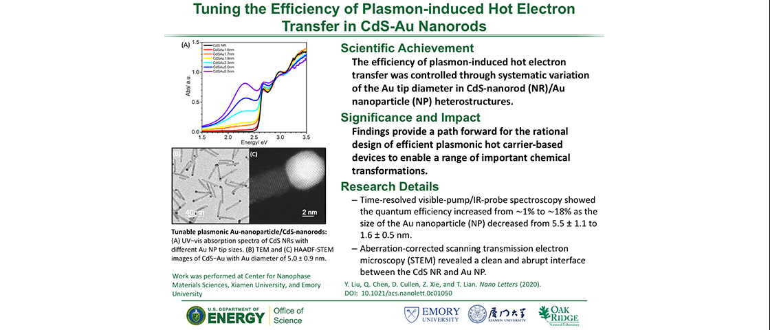 Tuning the Efficiency of Plasmon-induced Hot Electron Transfer in CdS-Au Nanorods