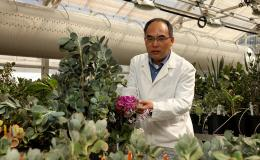 ORNL's Xiaohan Yang led a team who identified a common set of genes that enable different drought-resistant plants to survive in semi-arid conditions. This finding could play a significant role in bioengineering energy crops tolerant to water deficits. Cr