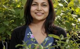 ORNL's Udaya Kalluri brings lab resources together for studies of plants.