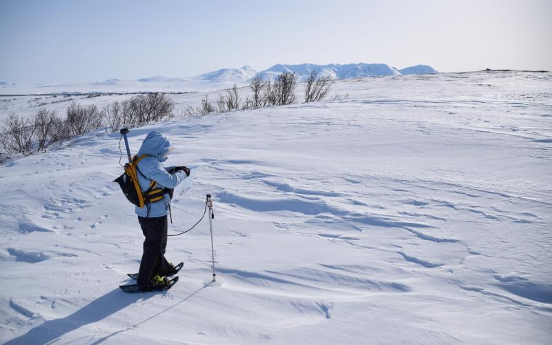A researcher measures snow depth at the Kougarok field site.