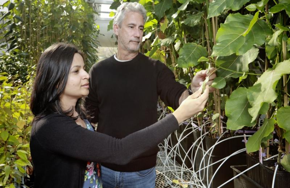 Gerald Tuskan on bioenergy sustainability | ORNL