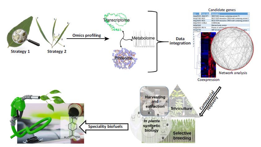 Plant derived terpenes a feedstock for specialty biofuels for Commercialization roadmap